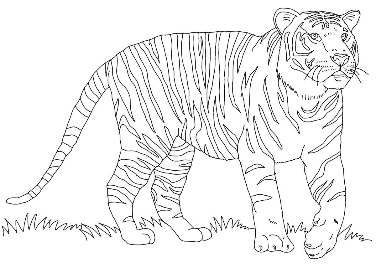 рисунки животных печать тверь фото зеркало