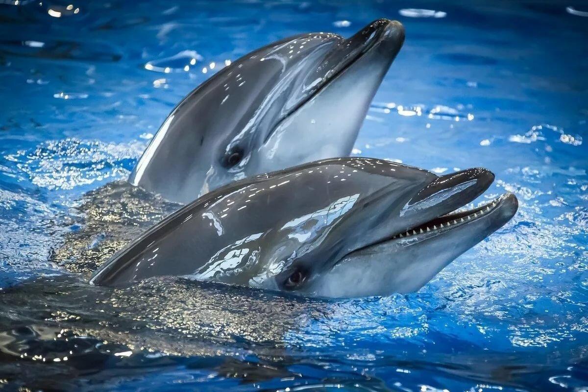 Картинка черноморская дельфин