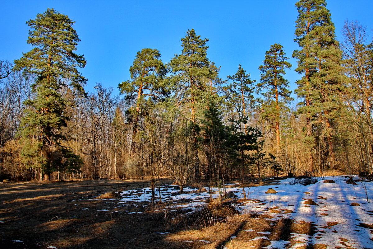 фото весенних лесных пейзажей рад