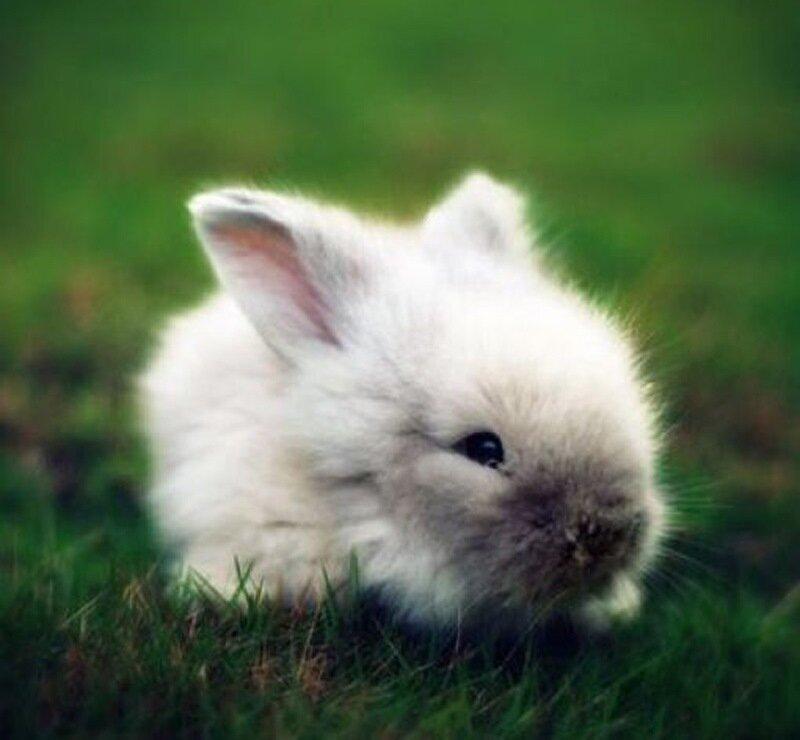 переборщить холодными милые кролики фото можете отфильтровать