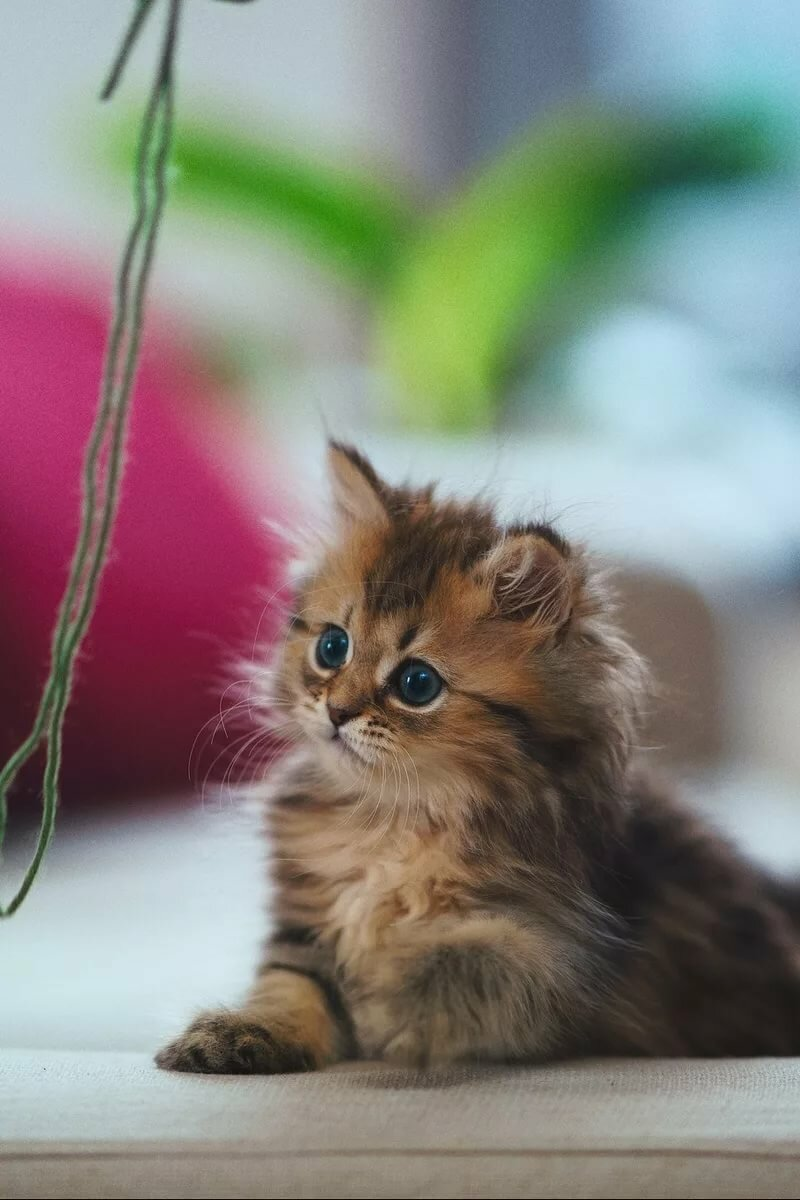 Котенок и телефон картинки