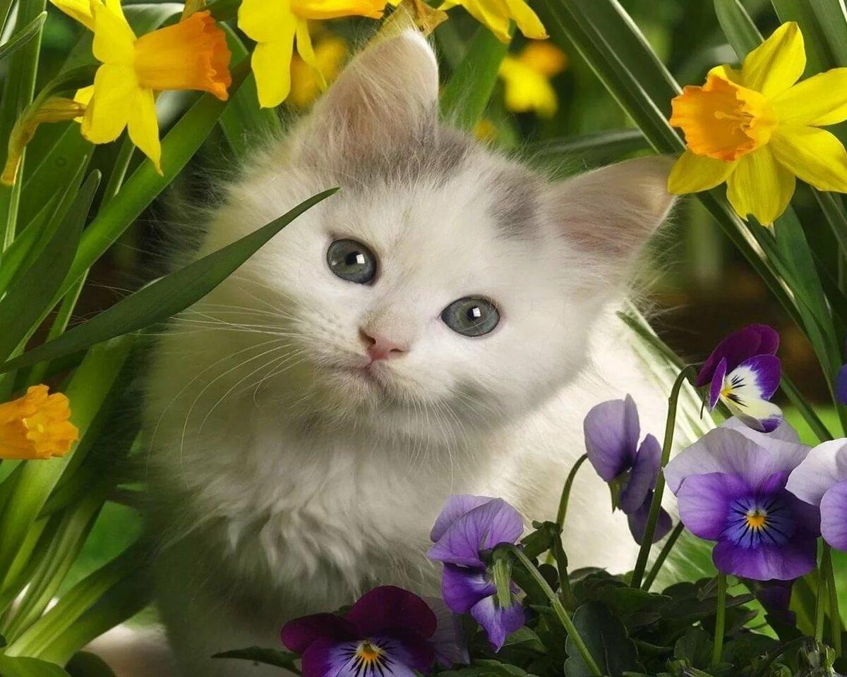 Кот в цветах картинки, надписью алкоголики картинки