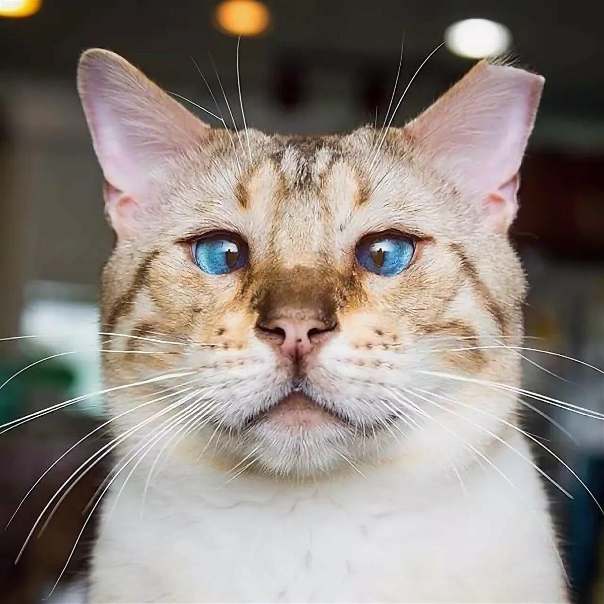 фото самые прикольные коты в мире фото искали