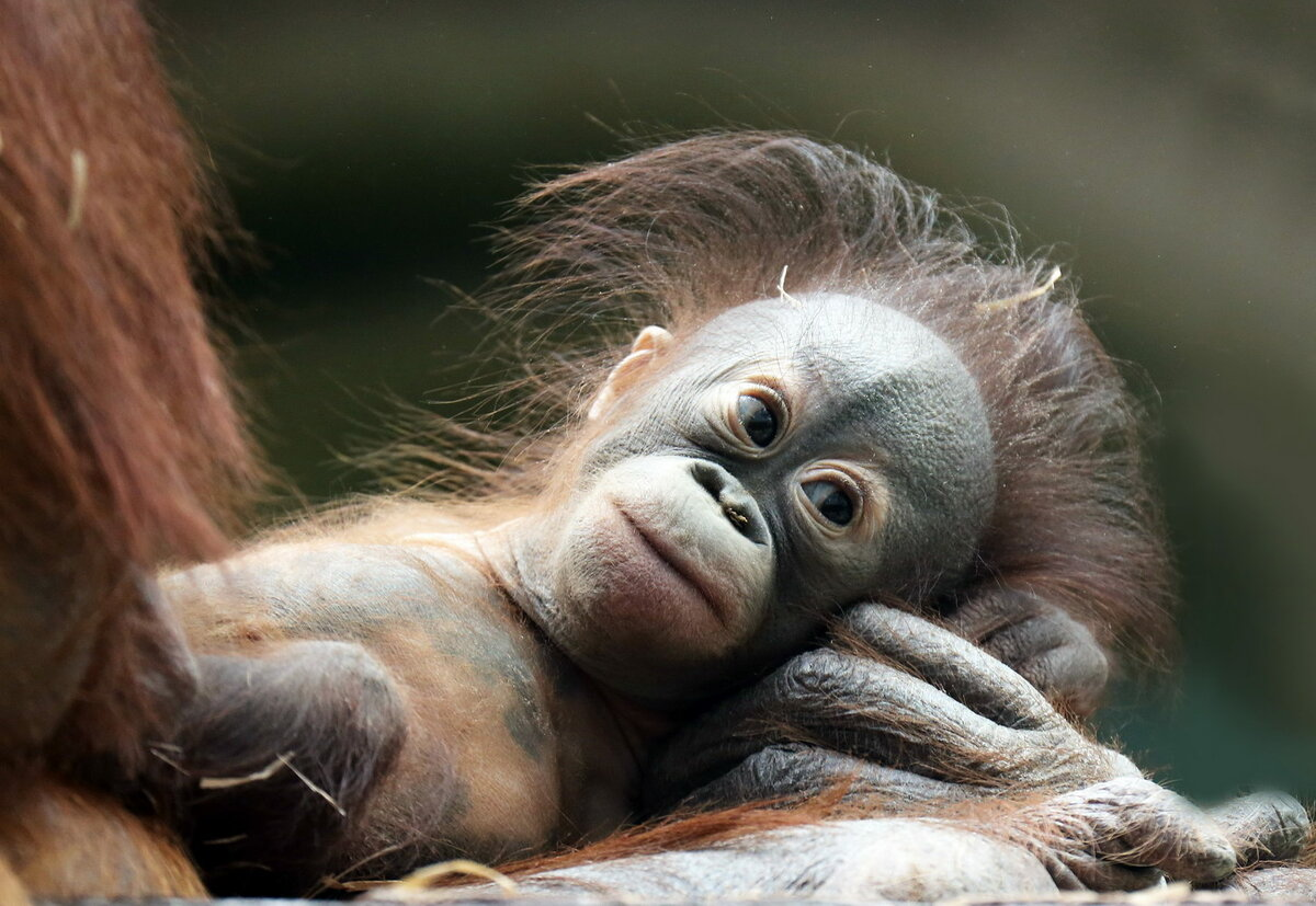 Картинка где обнимаются обезьянки