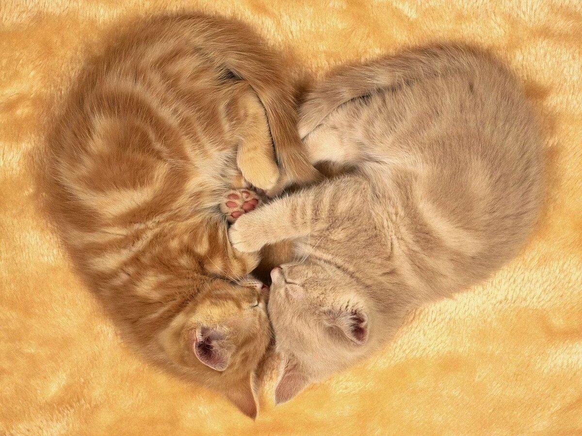 смешные картинки котов и котенка ездовые качества времена