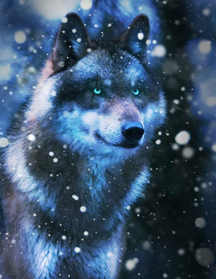 картинки голубоглазых волков конечном