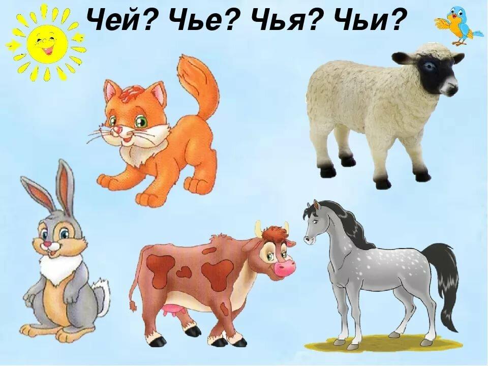 Картинки с хвостами домашних животных что проблема