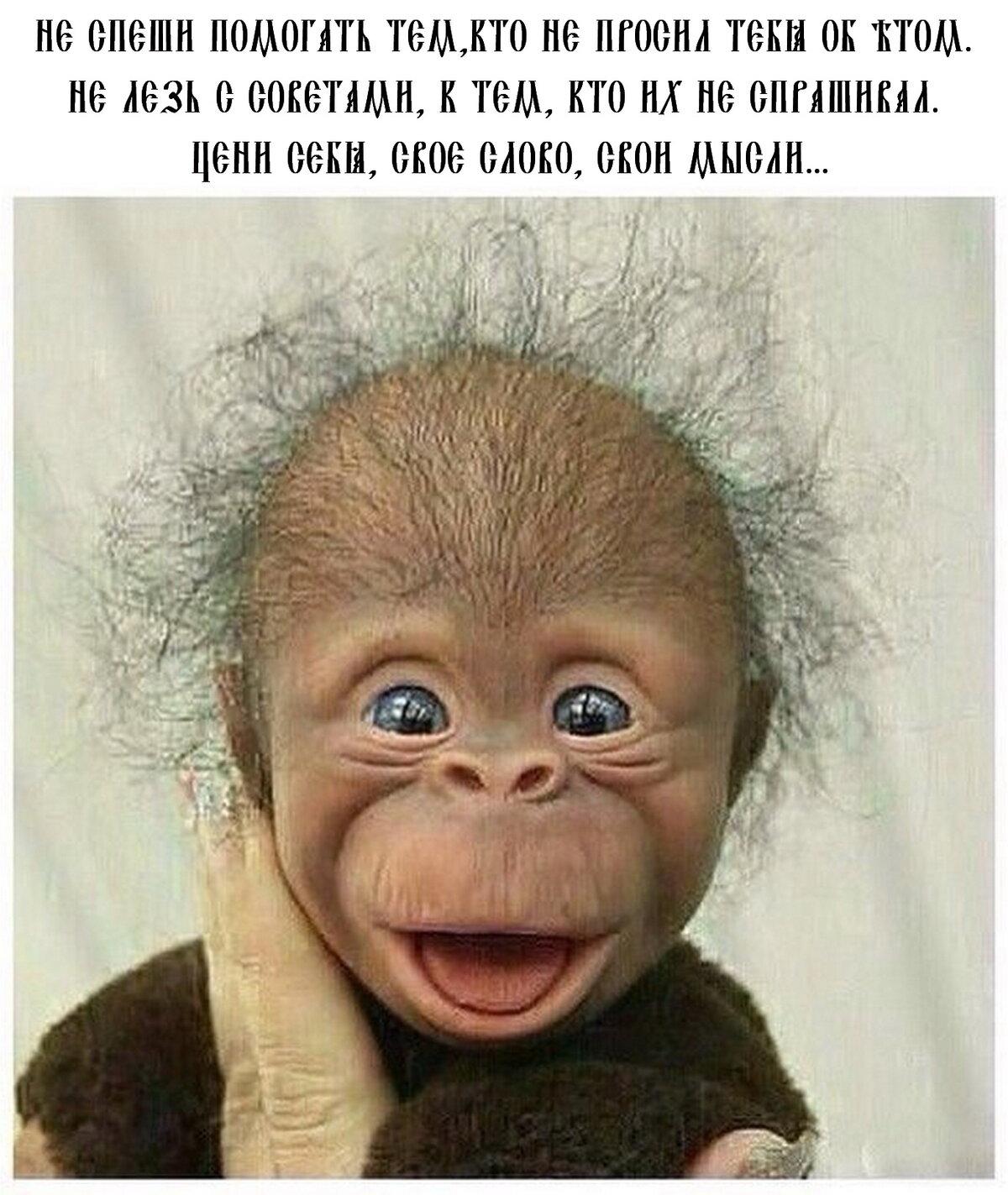 Прикольные картинки с обезьянками и надписями