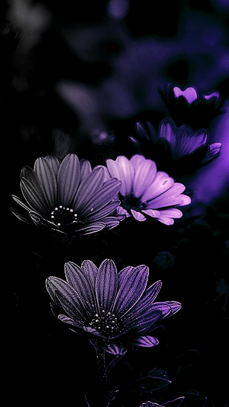 Красивые картинки на черном фоне высокого качества вертикальные