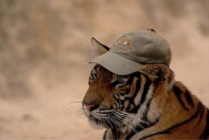 Картинки прикольные с тигром