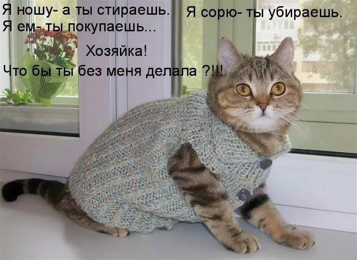 Картинки с надписями кошка, для любимой подружки