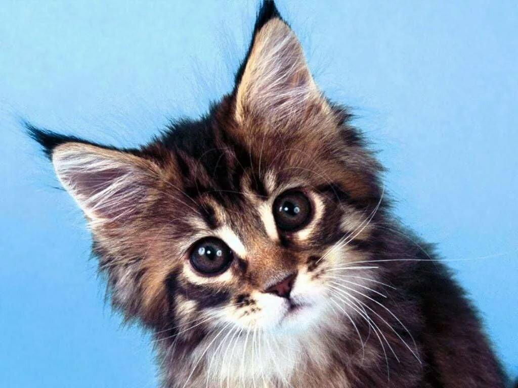 Картинки прости меня котик