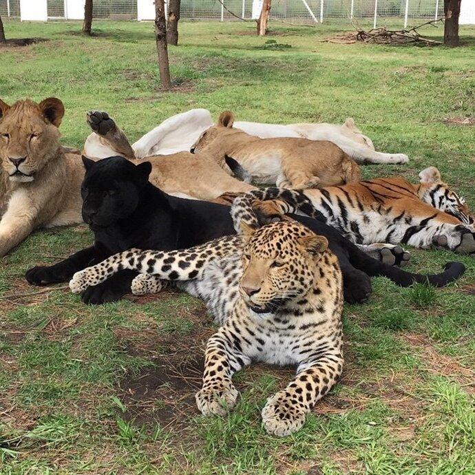 Самые смешные картинки про животных но только про животных, надписью валя тебя