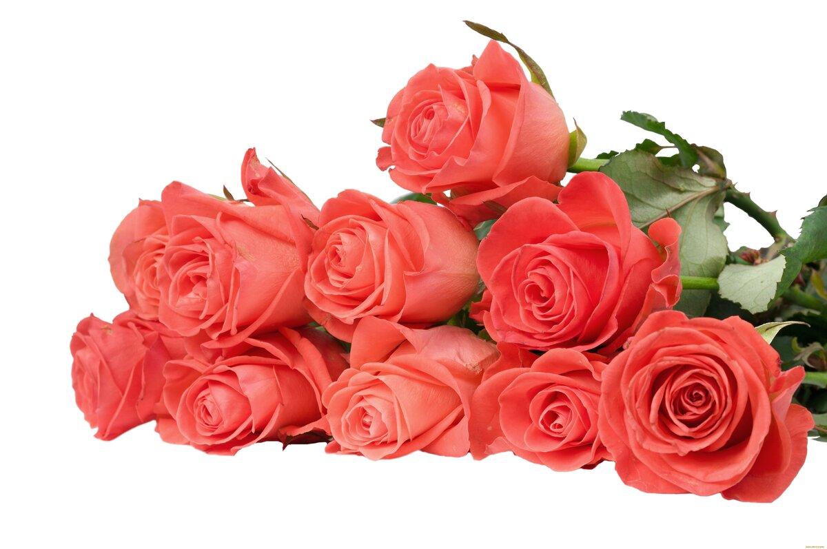 Розы в открытках в фотошопе