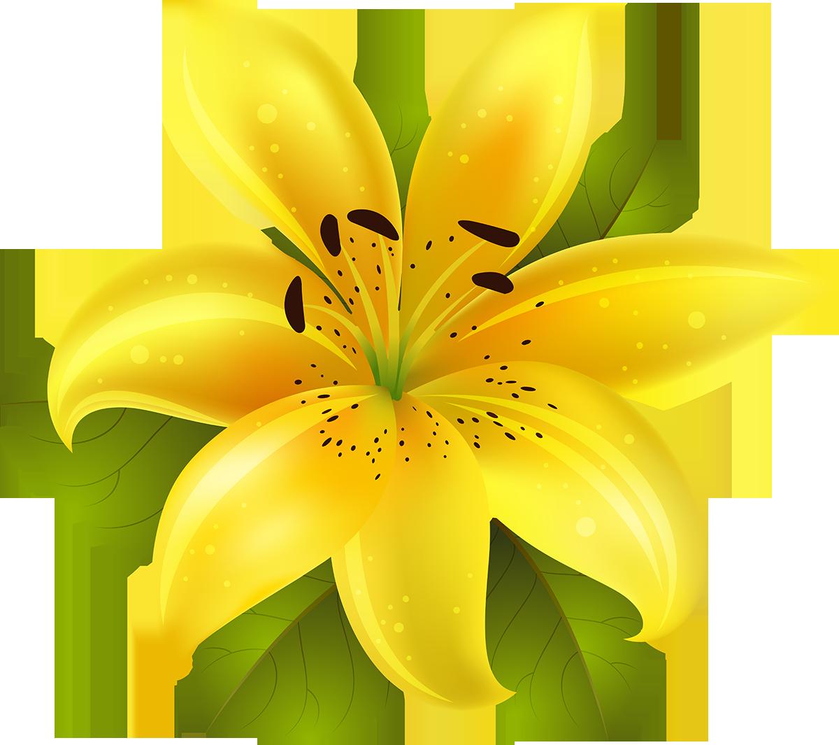 Поздравление, картинка лилии для детей