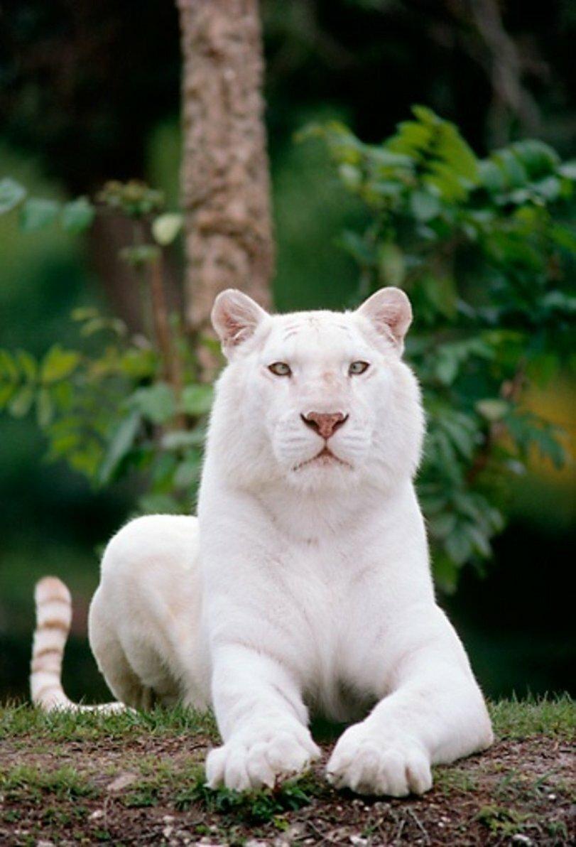 деревянные рейки фото животных альбиносов неловок