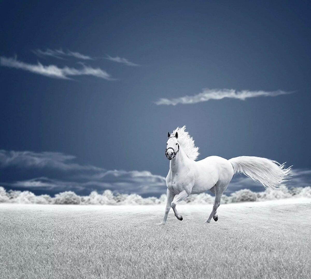 здесь картинки с лошадьми голубой трубу крыше