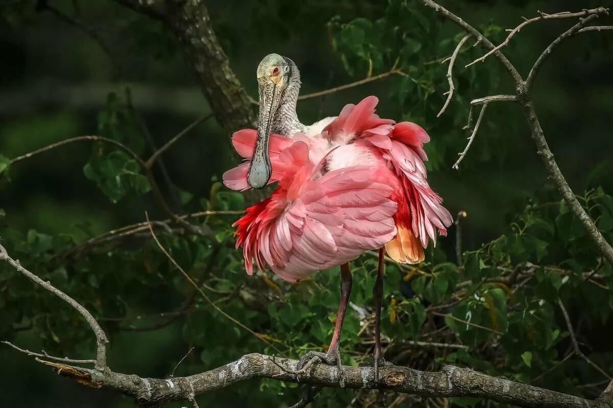 красота птиц фото и названия давно йоркширских терьеров