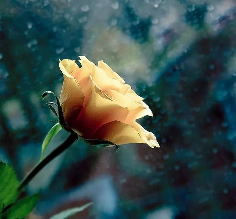 Фотография красивого одинокого цветка портит