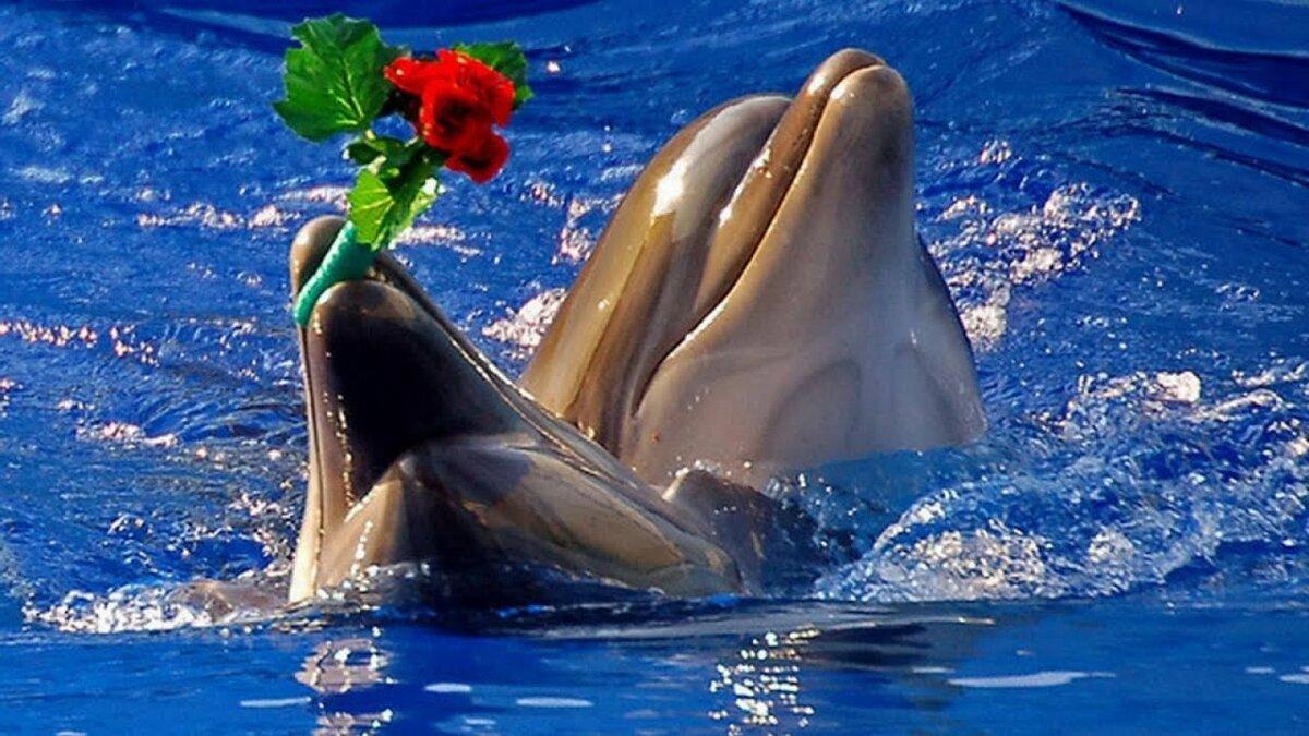 Открытки с дельфинами на день рождения