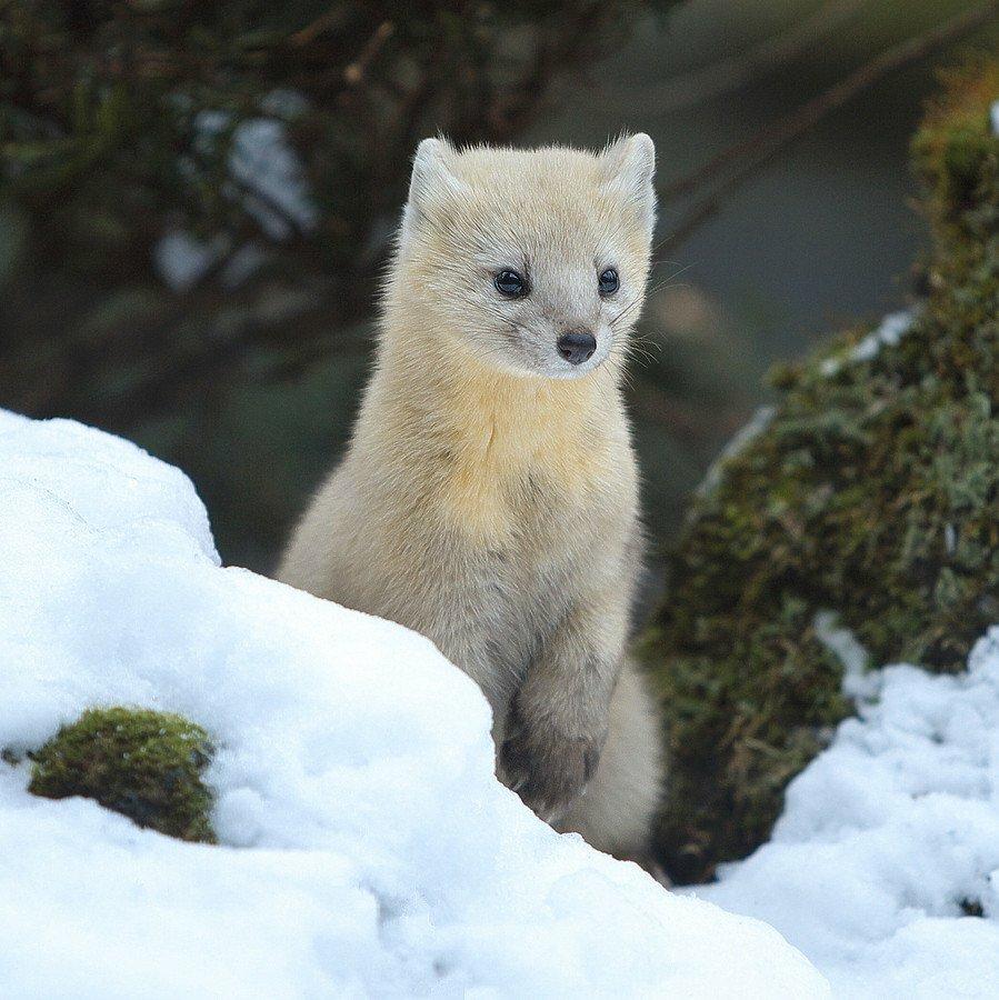 Япония животные картинки