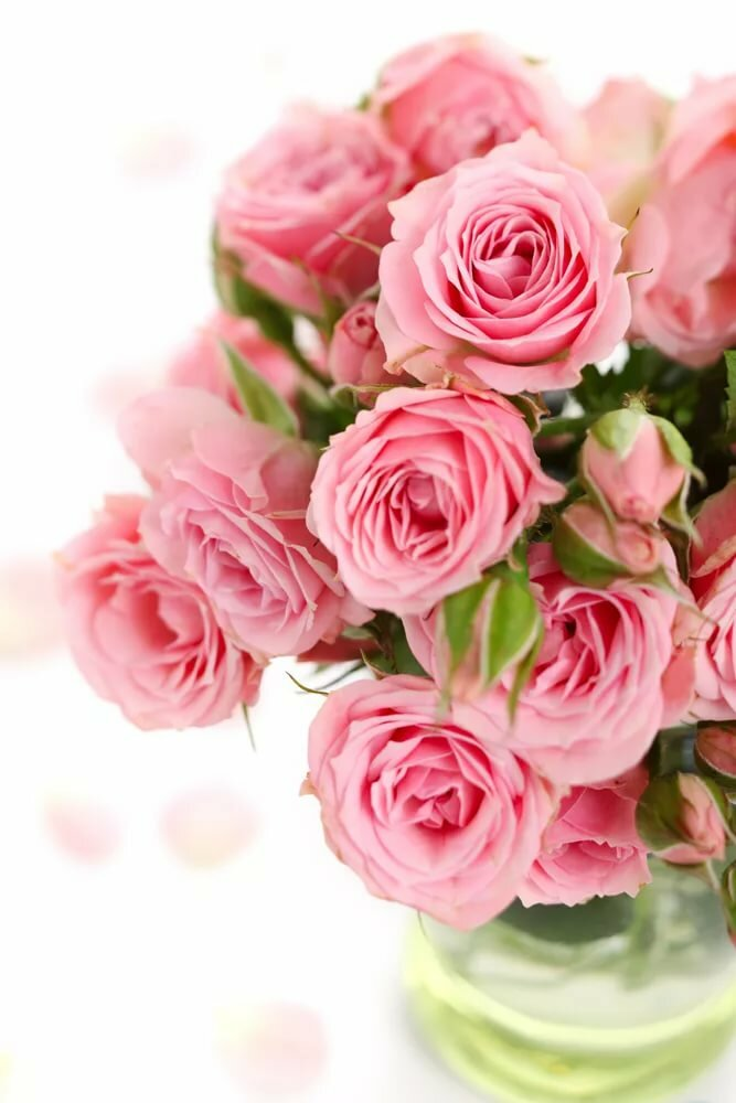 Лет, картинки цветочков для открытки