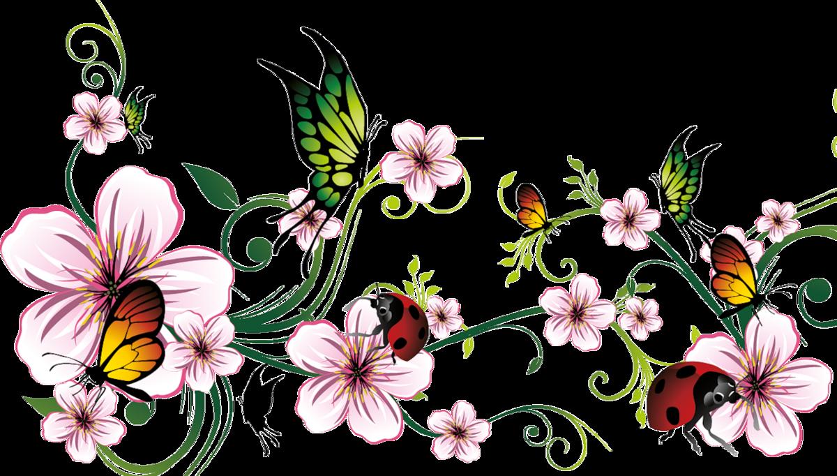 Цветы бабочки картинки на белом фоне