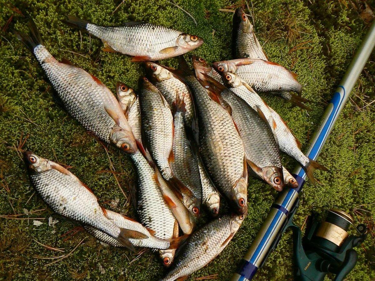 уверен, таких наша рыбалка фото разновид рыб хотят готовить, думая