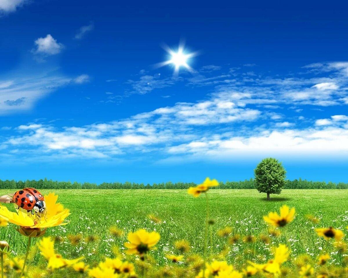 Картинки поле цветы солнце