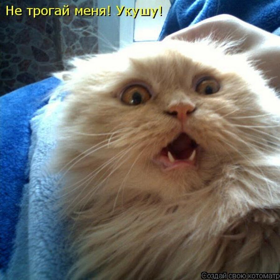 Смешные фото с кошками с надписями