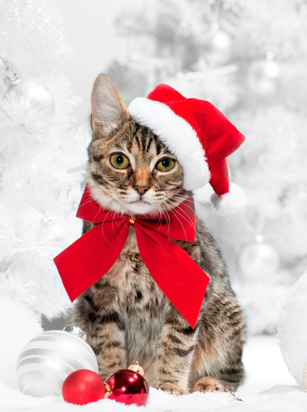 Картинки с новым годом с кошками, открытки шрифты