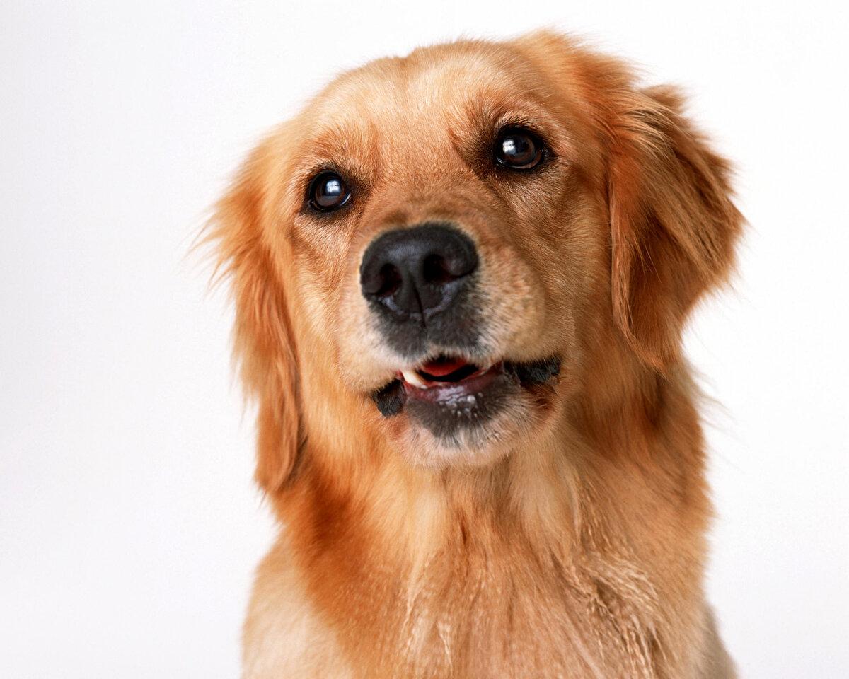 Картинка с псом