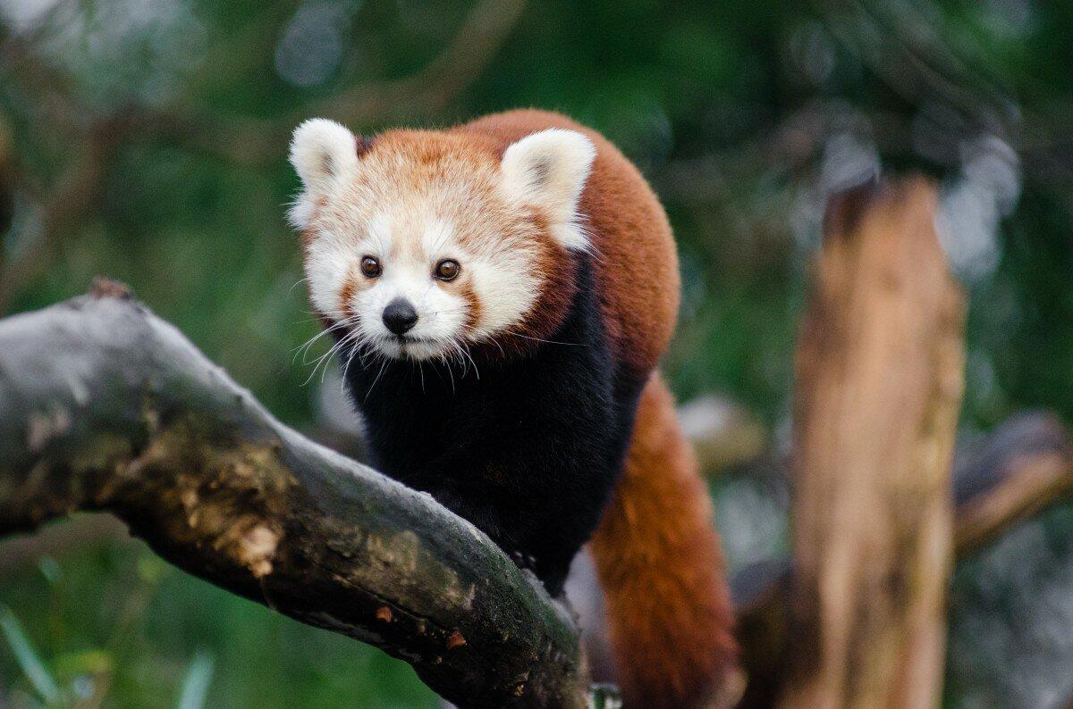 фото всех животных из красной книги бьюти-блогеры