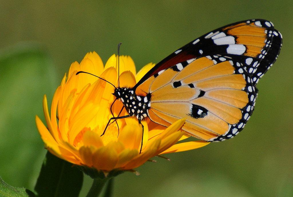 Картинка с бабочкой на цветке