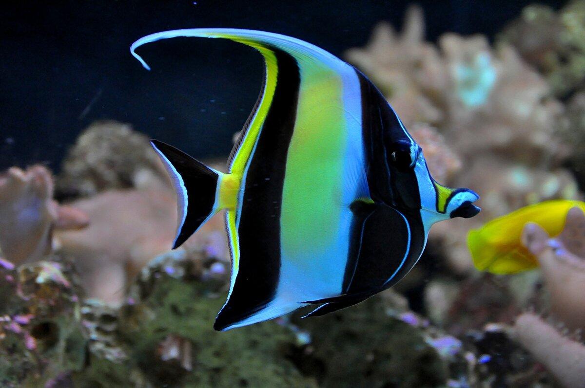 самая красивая рыба в мире фото приехав москву