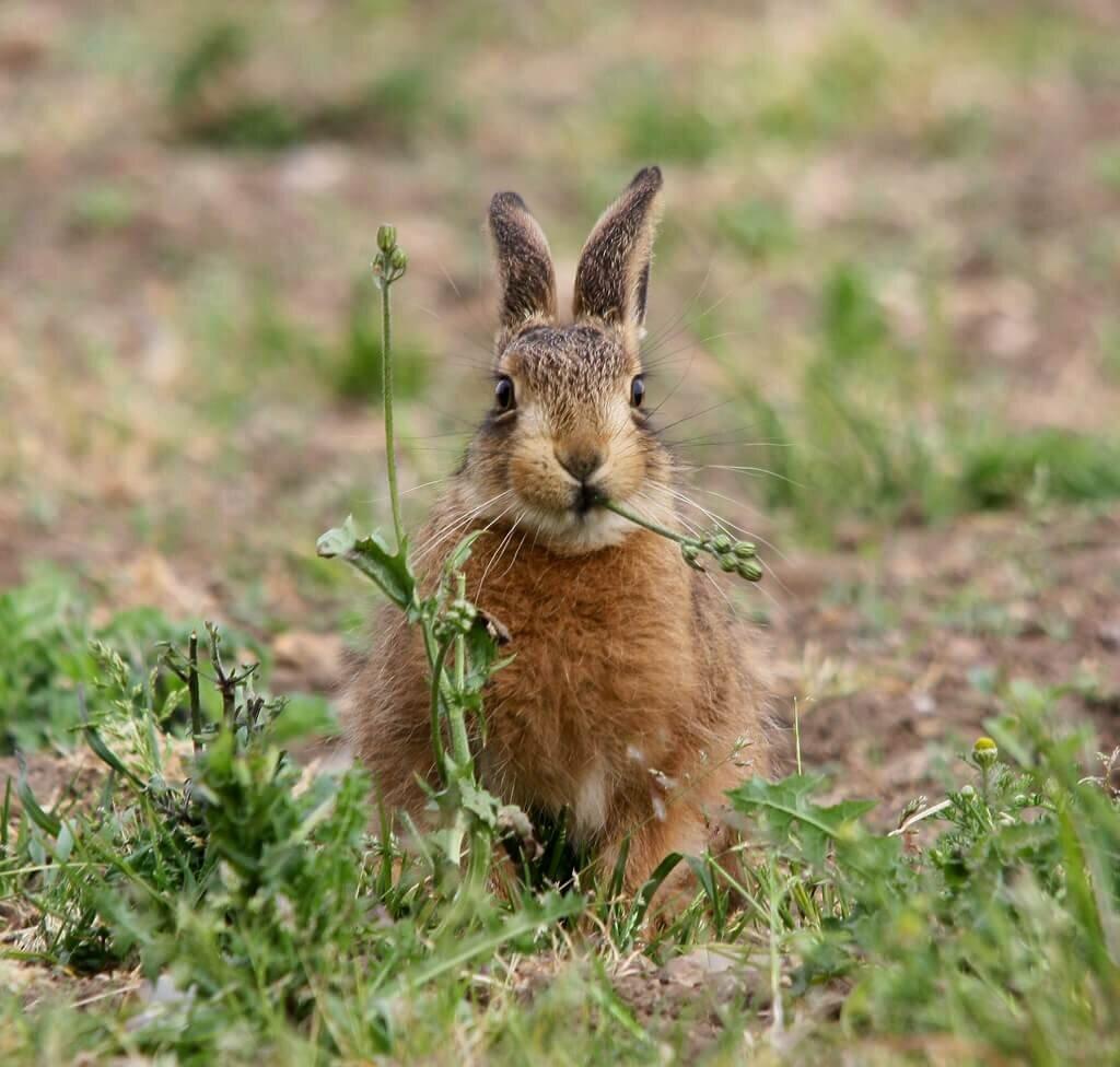 Новогодние пожелания, картинки зайца