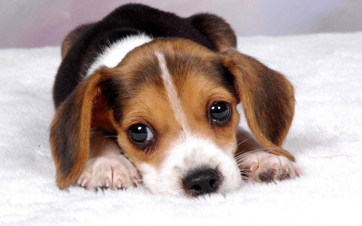 Картинки с щенятами милые