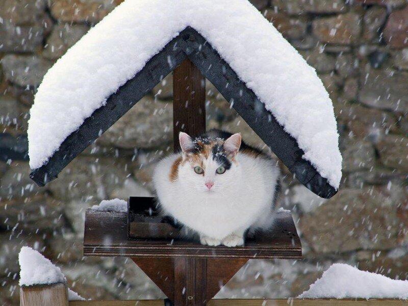 Надпись сделано, смешные картинки зима