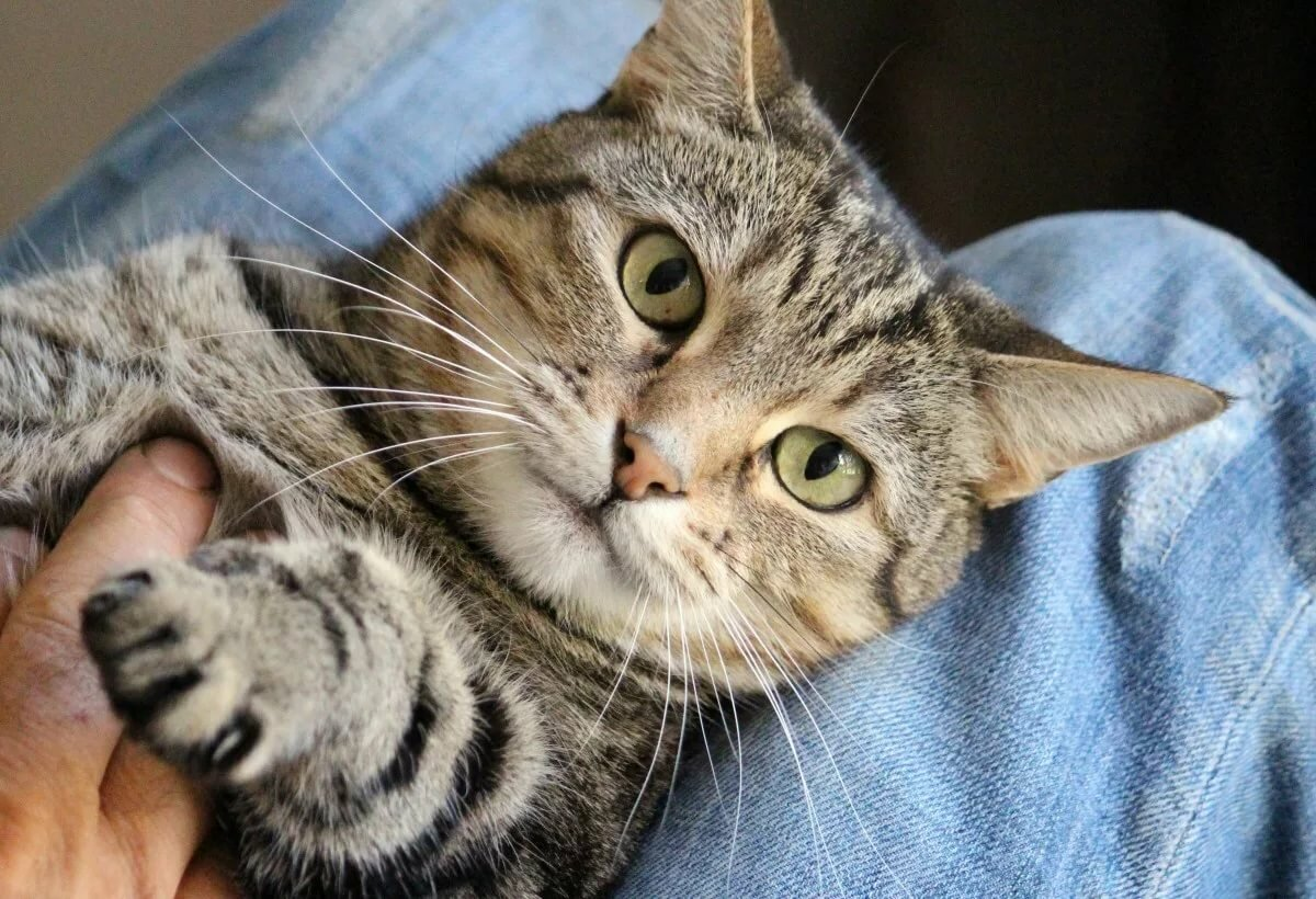 Картинки домашнего котика