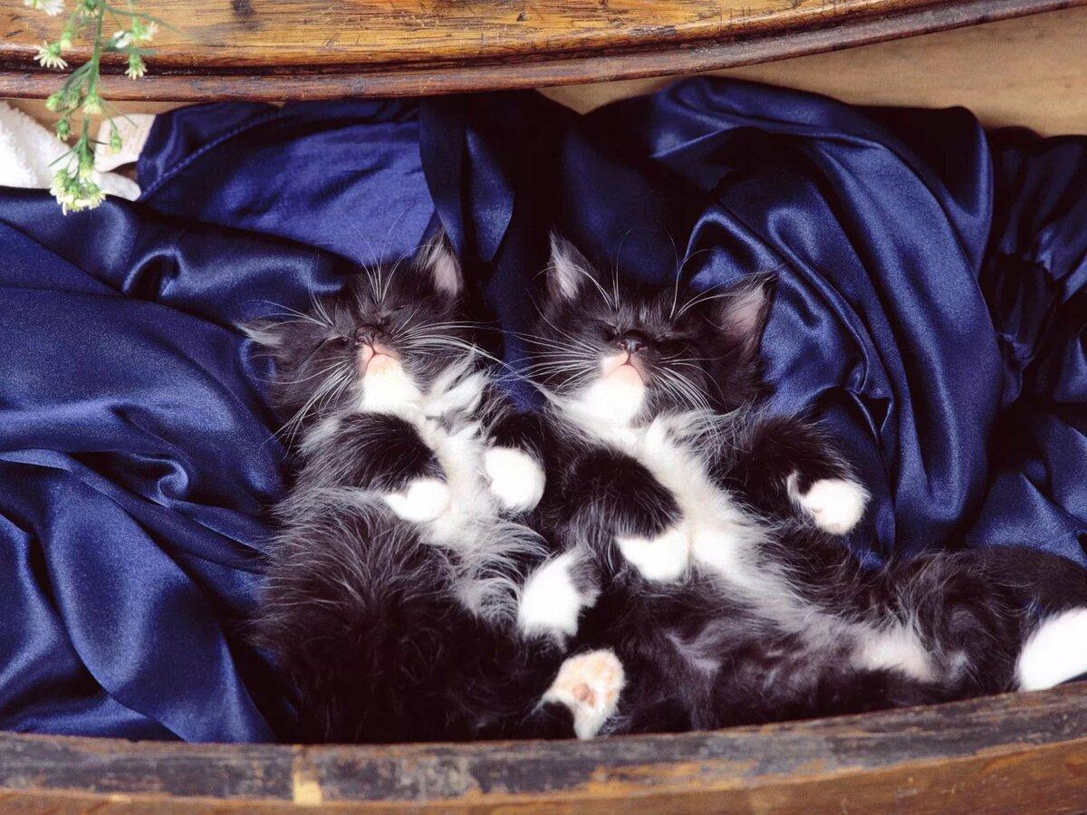 подвижная картинка спи сухенька также