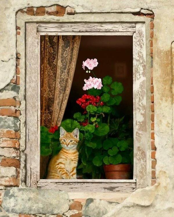 секции милая картинка окно приборы