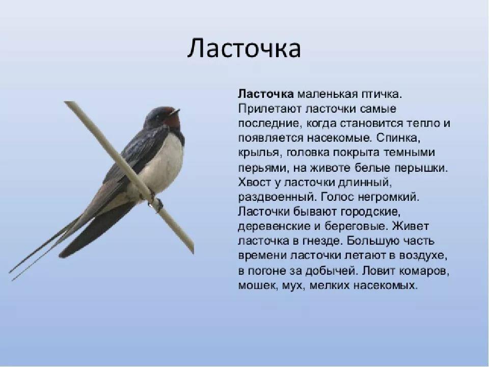 легенды о птицах с картинками фото-посиделки приглашают всех