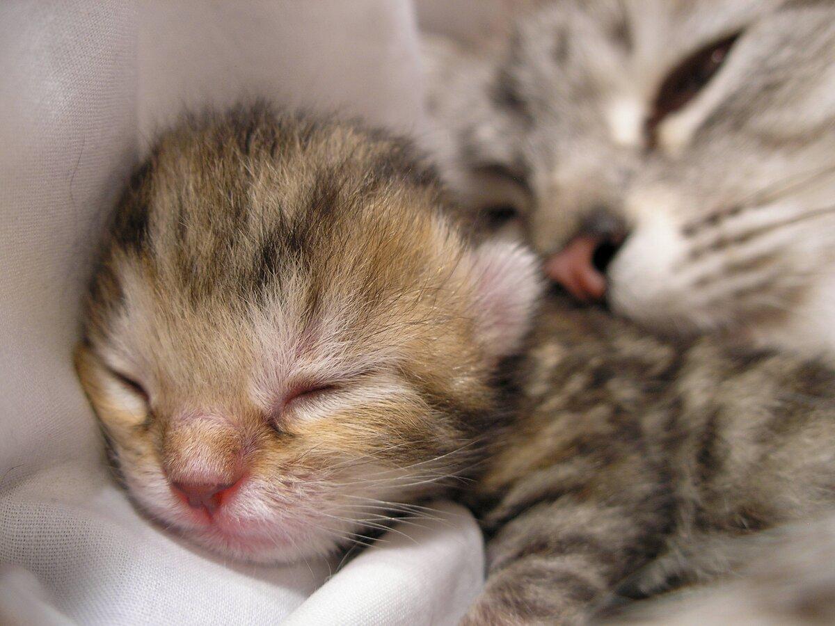 Картинки спящих котят и кошек