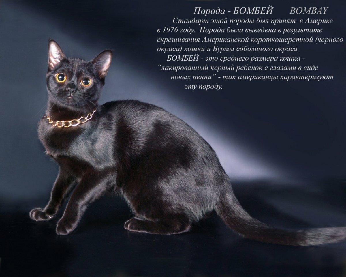 кошки разных пород с картинками
