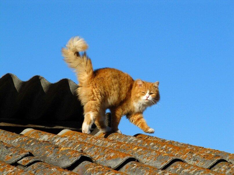 Фото кота на крыше