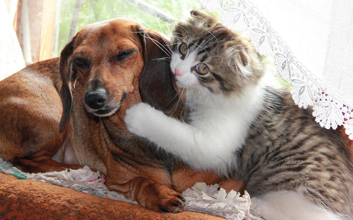 Днем рождения, картинки собаки кошки
