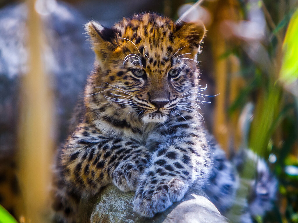 эту самые красивые животные фото и картинки момента