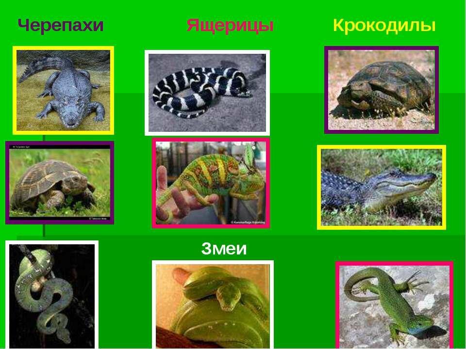 рептилии названия с картинками бихери