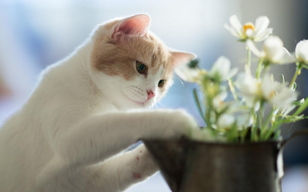Рождество стихами, картинки белые котята в цветах