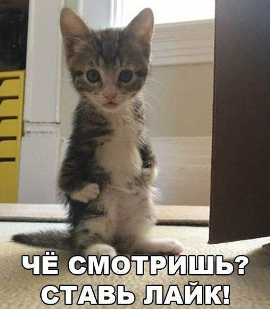 Очень смешные фотографии до слез с котами и надписями, веселые буквы